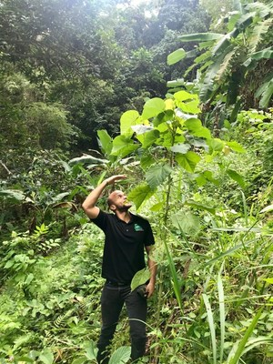 Alexander Beckford, Project Officer, Jamaica Forestry Department, measures up to a Blue Mahoe (Hibiscus Elatus), the national tree of Jamaica, that was planted one year earlier in the Montego Bay Valley Forestry Reserve as part of the Sandals Foundation and Forestry Department's Adopt-a-Hillside Programme.